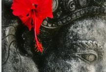 Yoga Life / È davvero uno yogi chi vede se stesso nell'intero universo e l'intero universo in se stesso. (Vivekananda)