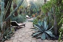Garden and Plants