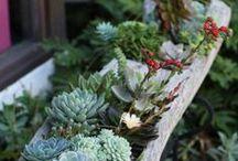 Gardening / outdoor & garden ideas