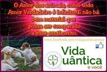 Animais  - Amigos e Companheiros / Publicações do Projeto Vida Quântica e Você sobre a Pureza dos animais