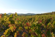 #Vinsetvignobles / reliefs, qualité des sols, climat : le terroir des Pyrénées Orientales est béni des dieux