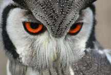 owl right now / by bennie montoya