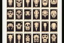 Weird things- Skulls