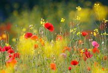 Flowers / Доска с великолепием этого мира-Цветы, это то, что каждый раз заставляет меня задуматься о величии мира, и всегда у меня не укладывается в голове, как природа может создавать такую цветовую палитру?? Это то, что меня вдохновляет!!