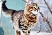 Cats / The cutest creatures on Earth!