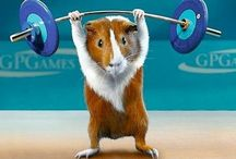 Guinea pig@モルモット / モルモット集合! Guinea pig