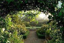 Garden - ideas /