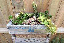Albbe & Terry's Garden / My hubby loves DIY!