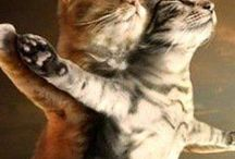 Chats, chats, chats ! / Jolies peintures de chats par des artistes abordant différents thèmes.