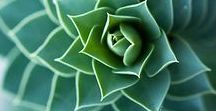 Photography | Botanical