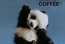 Animals On Caffeine