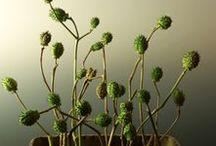 floristry_minimalism