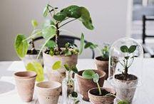 Vert / Plantes, jardins, terrasses, balcons, forêts…