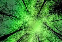 "Aurora / Australa sau Boreala,Aurora este intotdeauna stralucitoare si fascinanta. ""O mare si-un vifor nebun de lumina..."" L.Blaga ""Lumina"""
