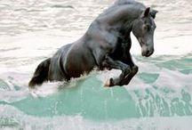 "Apa / ""Pe tarm unicornul,o clipa cat anul, se-nfrunta-n poveste cu oceanul.  E apa,sau alta fiinta,cu plesne, in care se simte intrand pan`la glezne?""   L.Blaga ""Unicornul si oceanul"""