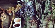 Botanical/Herbs/Flowers