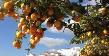 Costa tropical, Spain / The stretch of Spanish coastline south if Granada from Nerja to Mojacar. It's full of gorgeous beaches, fields tropical fruit and cute Andalusian towns. All with the spectacular backdrop of the Sierra Nevada mountains!