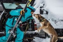 Dogs / Dog is man's best friend, and as you likely already know, we're big dog lovers at Skiis & Biikes. Expect to meet our pups when you come by the shop.  / by Skiis & Biikes