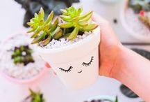 DIY gardening / Because I love plants <3