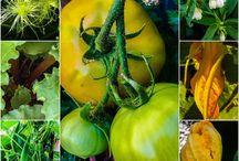 Gardening  / Edible gardening, flowers , roses, permaculture