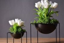 Ali: Gardening, Plants and Flowers Growing goods from Aliexpress (China)