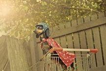 doggonit! / by Alexandra Brennan