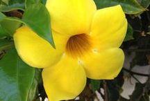 Summer Flowers / taken at Hapimag Residence San Augustin