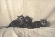Mrs. Hofstra's Cats / Images of Mrs. Hofstra's cats at the family estate in Hempstead, N.Y. (From the Hofstra Estate Collection)