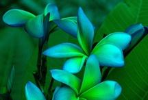 P-Plant