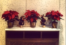 Christmas Time at Hera Hotel / Check out our Christmas decoration