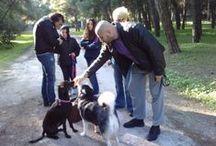 Συνάντηση Κοινωνικοποίησης και Απευαισθητοποίησης 17-11-2013 / Συμμετέχοντα σκυλιά: Άφρο, Ήρα, Λένα και Αναΐς. Γονείς: Στεφανή Ασπασία, Φωτεινάκου Χρυσούλα και Ποντικάκη Δήμητρα. Τοποθεσία: Άλσος Νέας Φιλαδέλφειας