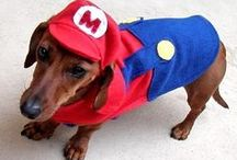 Dog's Costume & Fashion