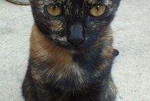 cat/macska