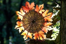 autumn/ősz