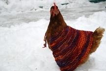 chicken/csirke