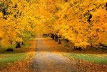 Autumn / Colors of Fall