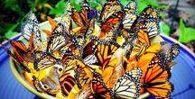 Butterflies / Beautiful