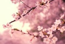 Spring / Celebrating the season of hope, life and renewal