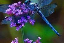 Dragonflies / .