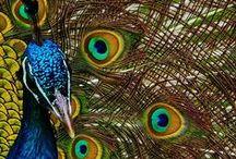 Birds Lovers / by Debarshi Dhar