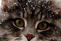 Cats / Elegante, proud animals