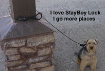 StayBoy Lock Info / Allows Pet Owner to Temporarily Secure Their Pet with Peace of Mind and include our pet in more of our life. Don't let pet thieves run or ruin our life with our pets.