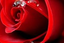 Red passion