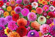 Flowers / Vive le printemps !