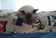 Life of Mimi & Smokey / A beautiful, adorable and mischievous cats life story pins by their Deaf Mum!