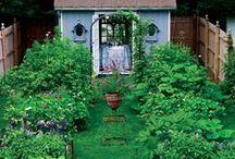 not-only a Vegetable Garden