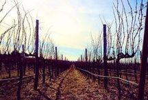 Farms | Vineyards