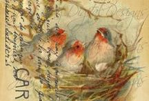 The Birds / Birds and intricate nests...