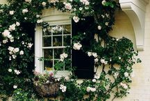 Gardening Inspiration / Gardening tips and inspiration for your backyard paradise.  / by Anita