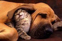 Entre chiens et chats? / Cats dogs ? / by Colette Béïque